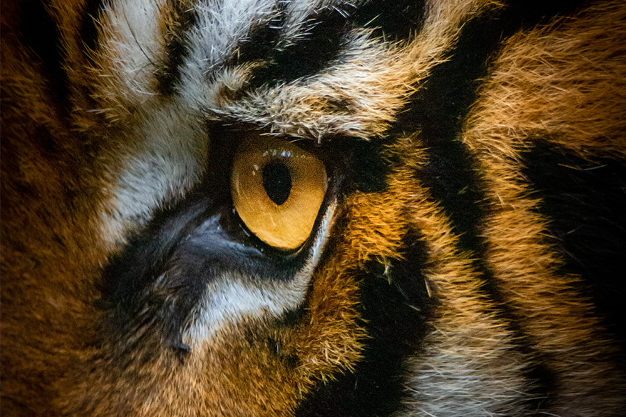 Animal Expert On Tiger King: The Story Netflix Didn't Tell You