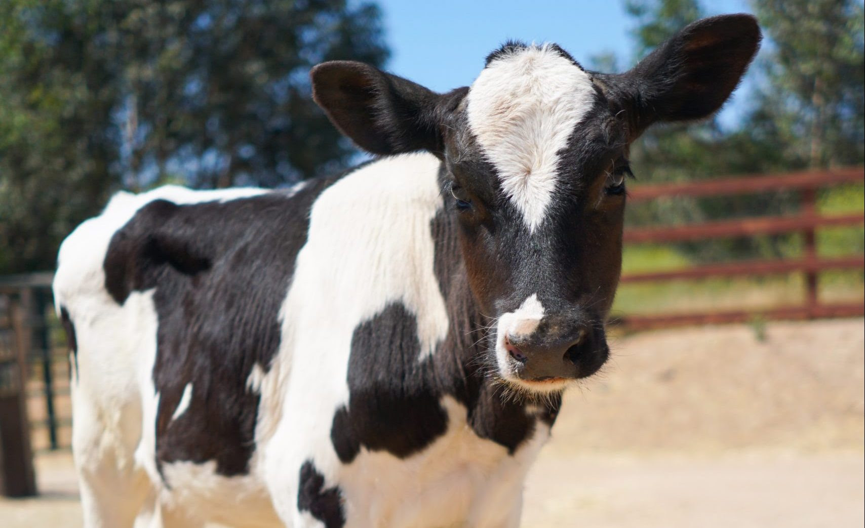 TREELINE CHEESE SUPPORTS FARM SANCTUARY'S ADOPT A FARM ANIMAL PROGRAM FOR FIFTH YEAR IN A ROW